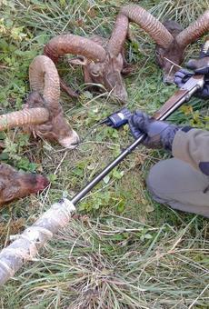 Una xarxa de caçadors furtius de fora de Catalunya opera al Pallars
