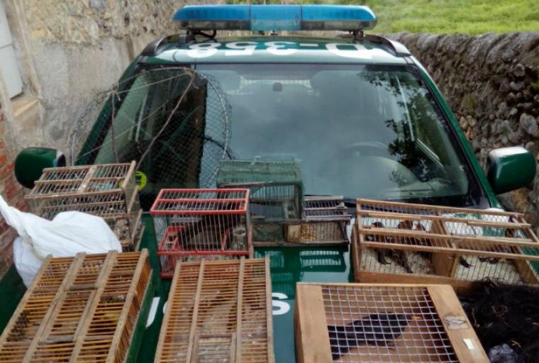 Denuncien un veí de l'Alt Urgell per tinença il·legal de fins a 26 ocells