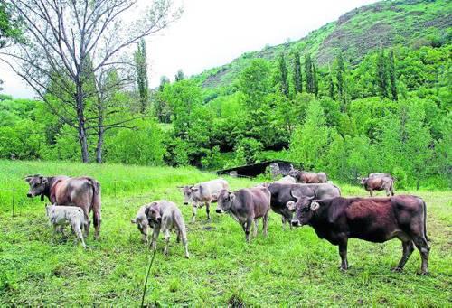 Els ramaders del Pallars estudien emprendre accions legals contra la Generalitat