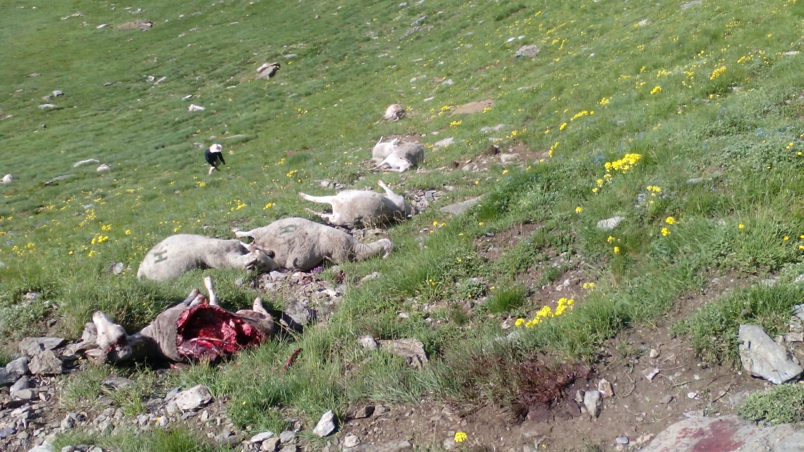 UA demana la dimissió del conseller Calvet pels atacs de l'ós al Pirineu