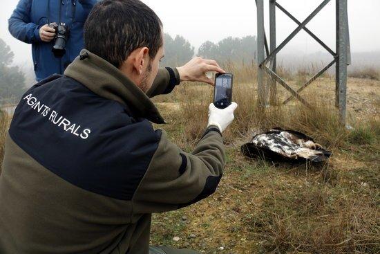 Endesa instal·larà al Prepirineu fundes aïllants per protegir l'avifauna