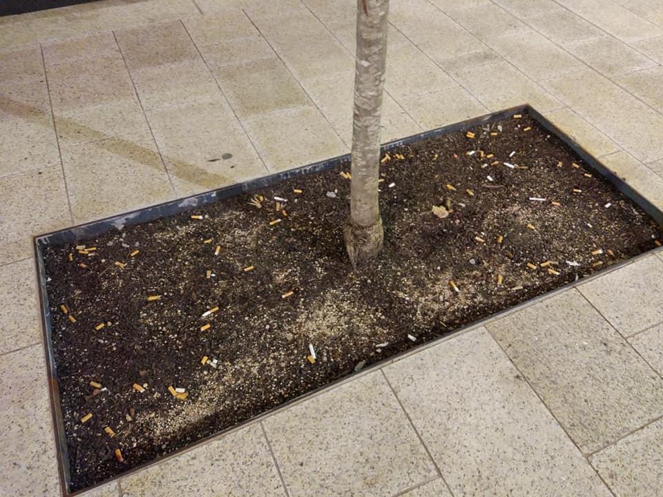 Els escocells dels arbres de l'avinguda Meritxell, cendrers de burilles