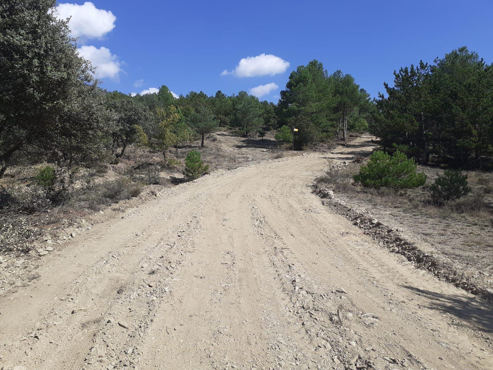 Indignació per la tala d'arbres per eixamplar un camí entre la Seu i el Pla de les Forques