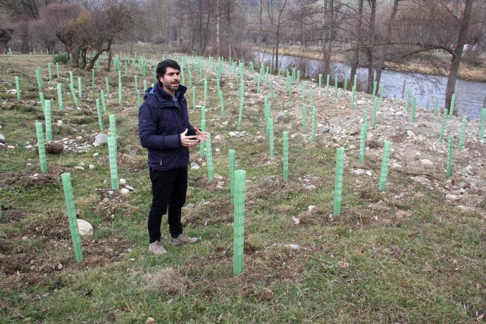 Un projecte recupera les condicions d'un entorn de bosc de ribera a Bellver de Cerdanya