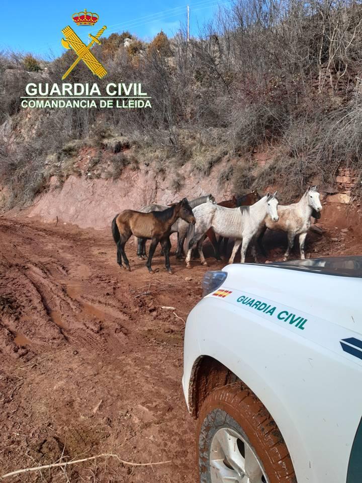 Denunciada una explotació ramadera del Pallars pel mal estat dels cavalls